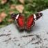 einer der vielen Schmetterlinge