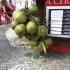 Kokosnüsse zum Trinken