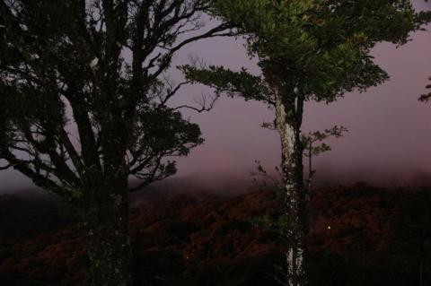 Republic of Costa Rica - Nebelwald Monteverde