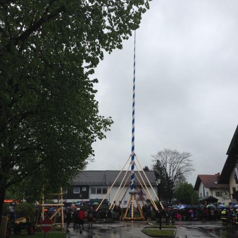 Siegertsbrunn - Geschafft - Der Maibaum steht!