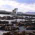 Frisco - Fishermans Wharf