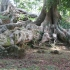 Botanischer Garten Entebbe