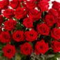 roseszhk