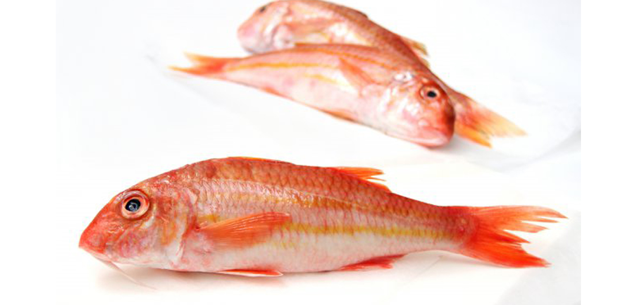 A wide range of red mullet recipes for Red mullet fish