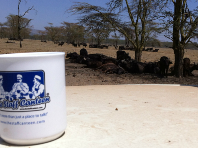 water buffalo in the shade and mug