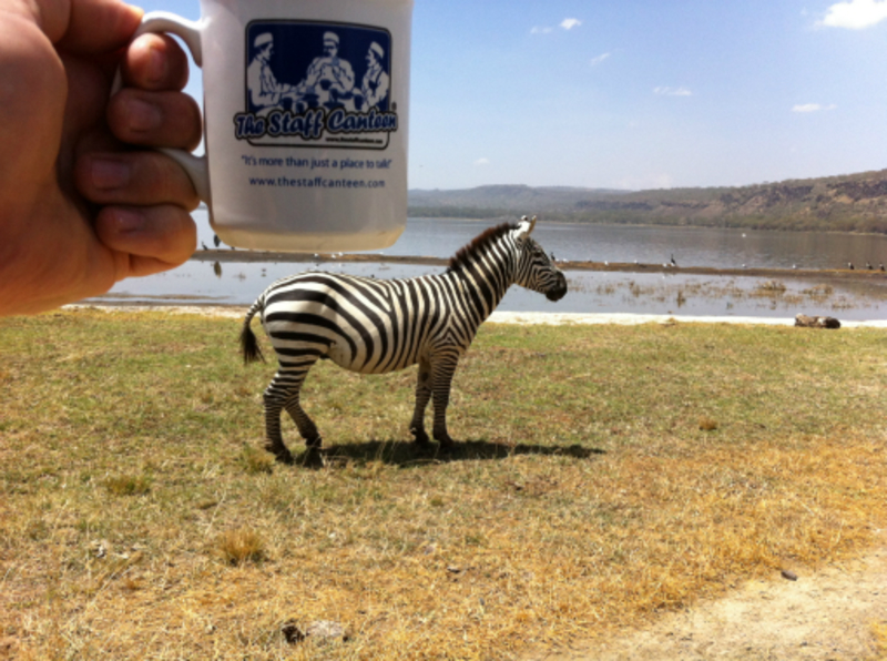 close up zebra/mug 2