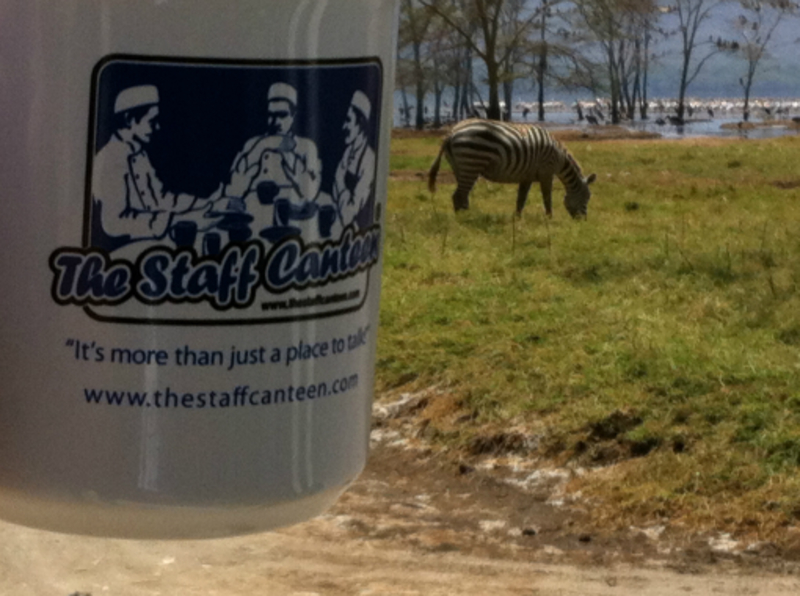 zebras, mug, pelicans in background