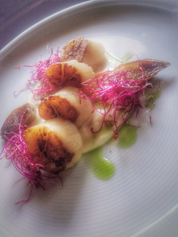 Seared scallops on coliflower puree,caramelized onions,mussels,sauce,dill oil and beetroot garnish :)
