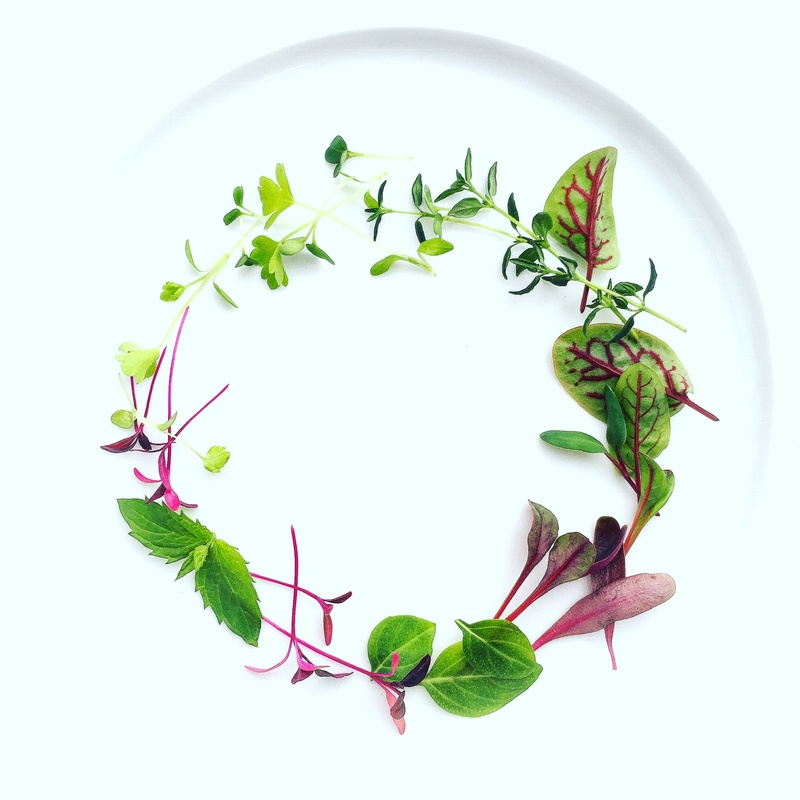 Magical Microgreens
