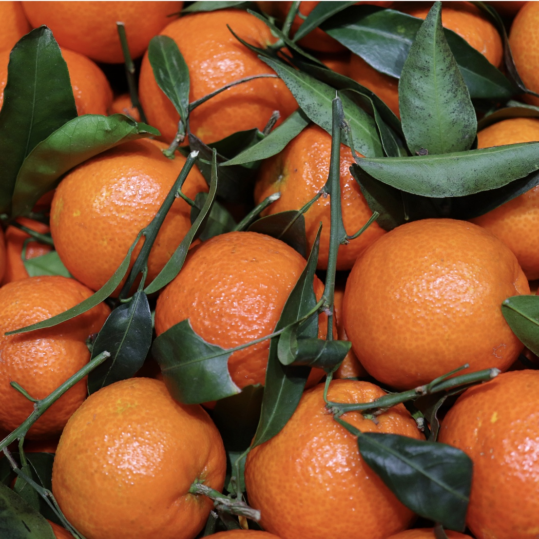 A true seasonal delight! These leafy clementines are absolutely bursting with sweet/acidic juiciness!