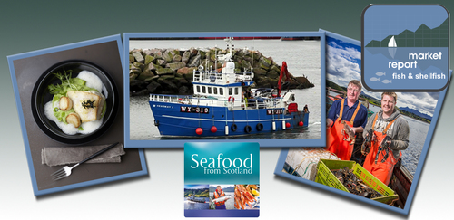 Seafood Seasonal update - November 2017
