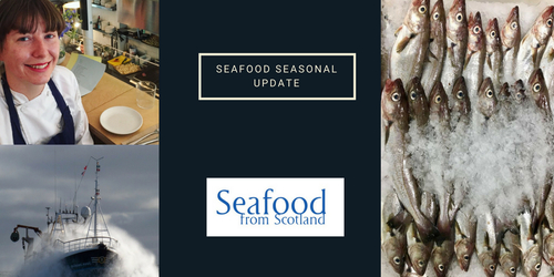 Seafood Seasonal update - August 2018