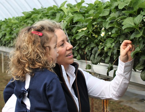 Meet our strawberry grower - Annabel's Deliciously British