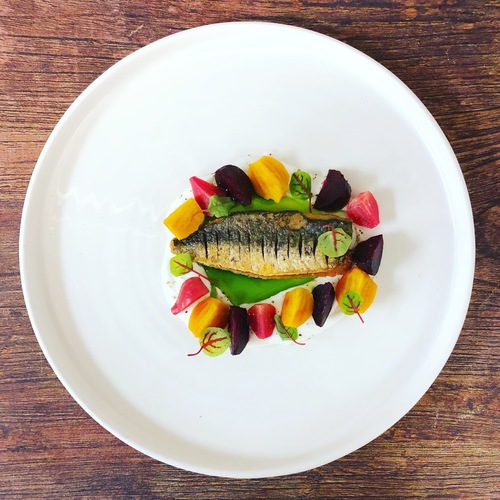 Slightly cured mackerel, yogurt and herb dressing, baby beetroots and red vein sorrel.