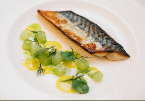 Grilled mackerel, dill emulsion, compressed cucumber