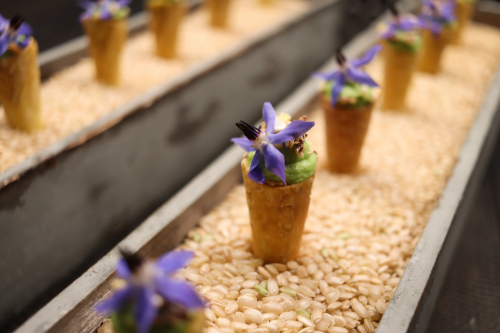 Edamame and coriander purée, puffed grains granola, wonton, garden borage...