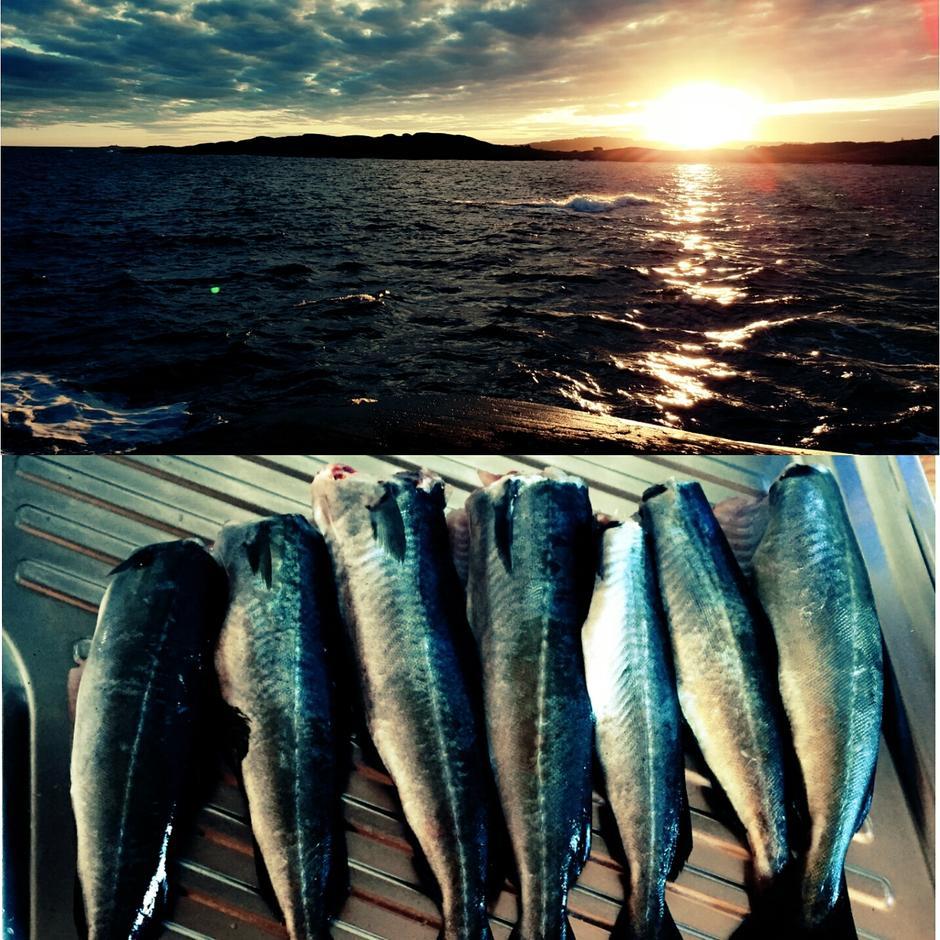 Stavern høst fisk fangst hyttetur solnedgang kveldsfiske