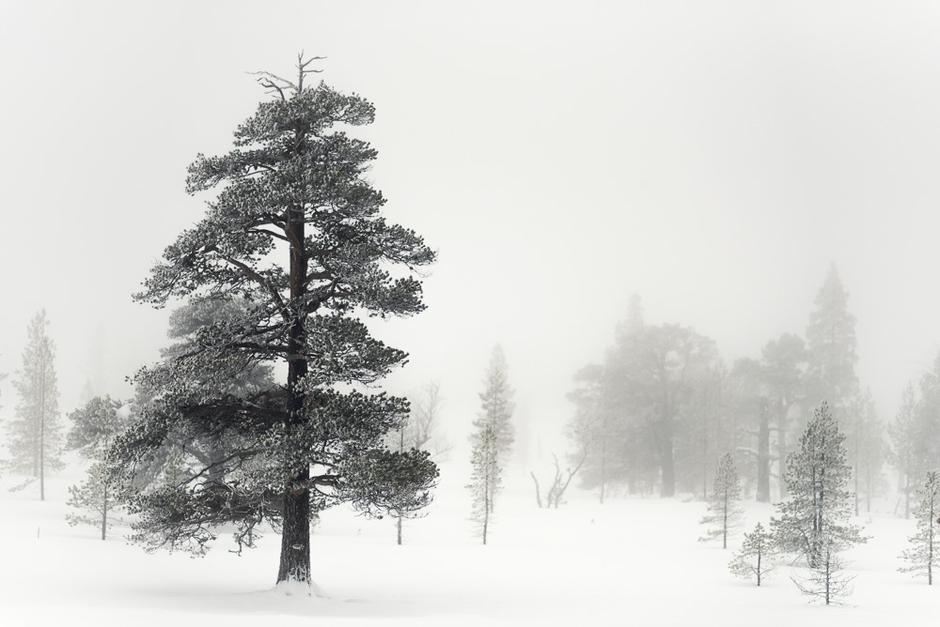 Det er lave trær, høye trær, trær med svulmende stammer og trær med tynne stammer.