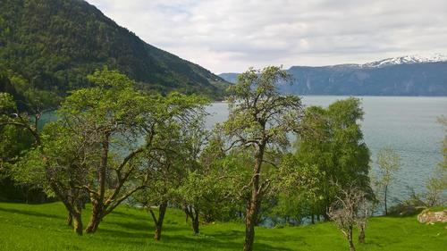 Frukthagen i Stavedalen med utsikt utover til Alræk.