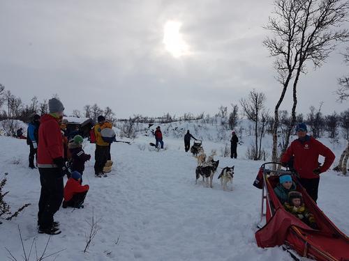 Hundesledekjøring med barnas turlag