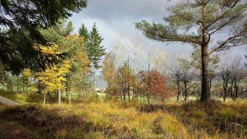 Høst i Arboretet 5