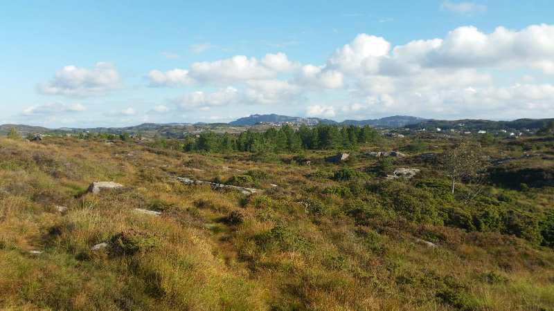 Litt av terrenget til Purkeneset.