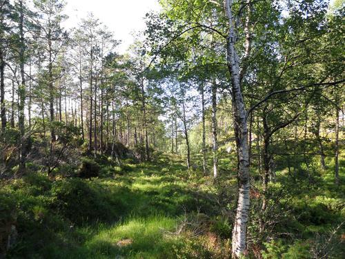 Stien frå Dritland mot Svadberg
