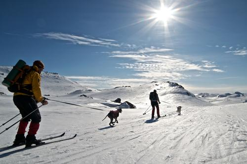 Skitur med hund