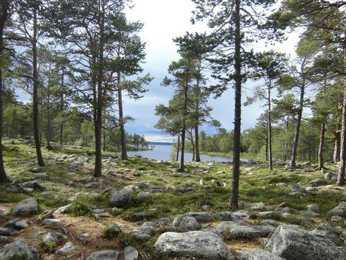 Sommern i Femundsmarka. Utsikt mot Femunden og elva Røa.
