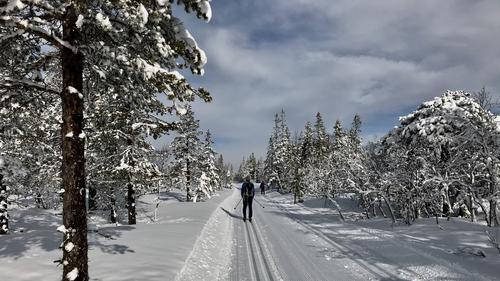 Skitur ved Vollkoia og til Blåmyrkoia 11.03.2020.