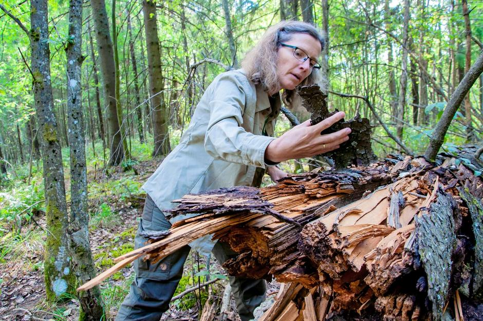 LEVENDE: Når trær dør, flytter sopp, lav, insekter og mose inn. Faktisk er død ved noe av det mest levende en finner i skogen, sier Anne.