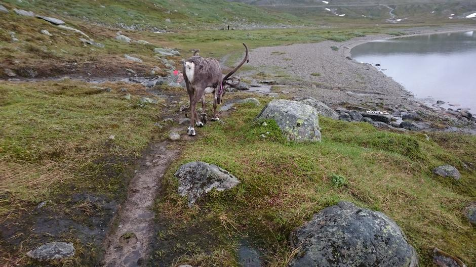 Rudolf leder an!