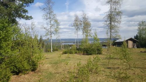 Bilde fra Finnskogen, ikke fra turen.
