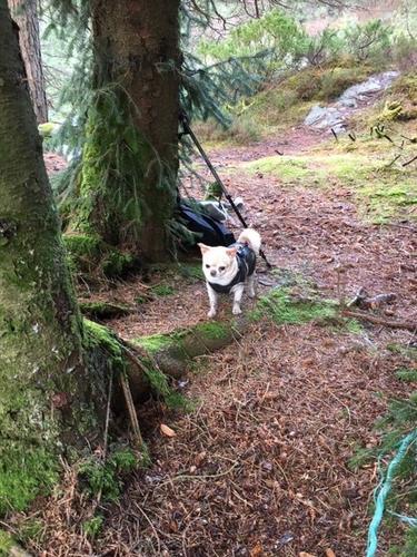 Hunden Emil er også med til Bestemortre.
