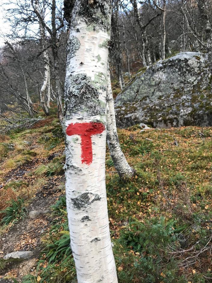Familie på fire fant 64 T-merkinger fra stistart i Hodnaberg til Torfinnsheim. Hvor mange finner du?