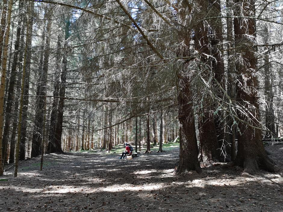 Inne i den magiske skogen på Veøya.