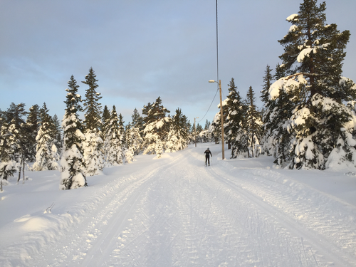 Uke 2: Skiløyper på Hedmarksvidda fredag 12.01.