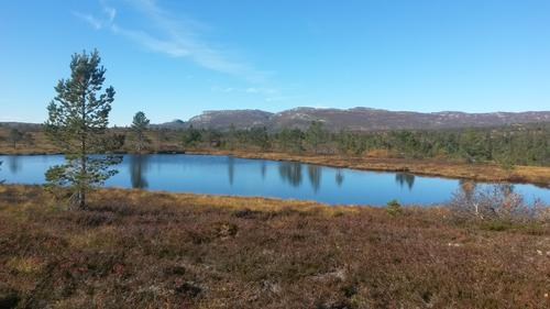 Turtips- en annerledes vei til Søtdalsstulen