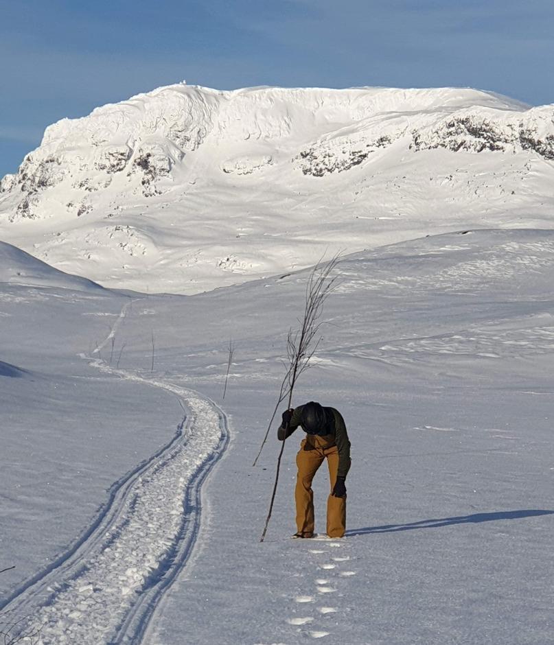 Fra Haukeliseter er det kvistet til Holmavatn og rundt Ulevåløypa.