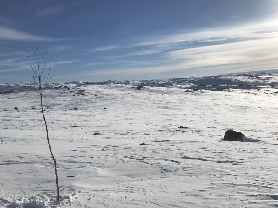 Øst for Blåsjø 14 mars.