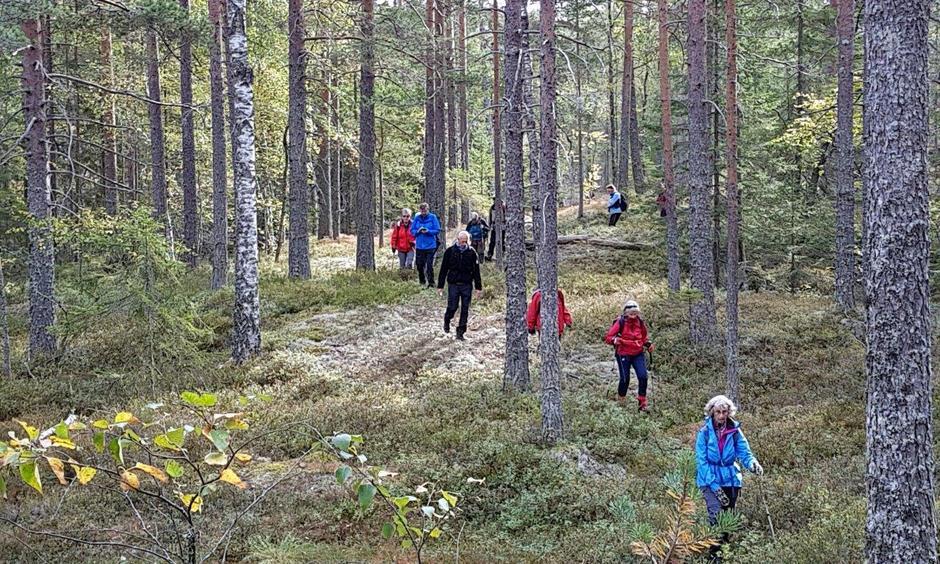 På vei gjennom skogen.