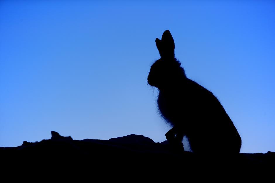 I BLÅTIMEN: Harepus ser kanskje søt og uskyldig ut, men inni den lille kroppen bor det også en skikkelig slåsskjempe.