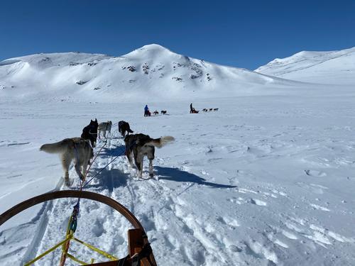 Hundekjøring i vinterferien - med ditt eget huskyspann!