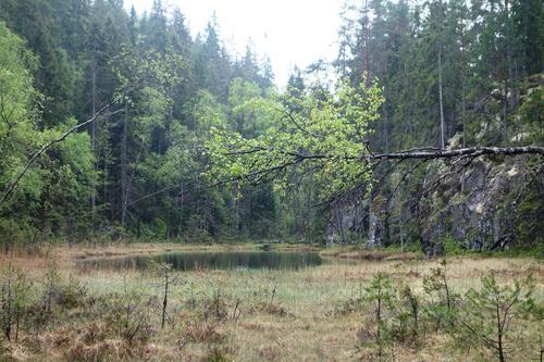 I Østmarka naturreservat