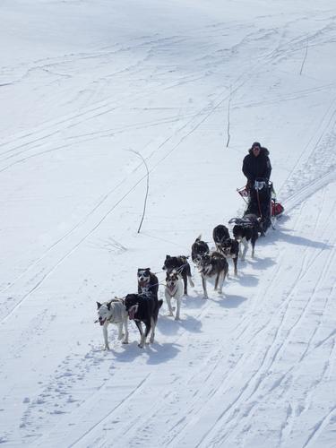 På tur med polarhunder i Skarvheimen