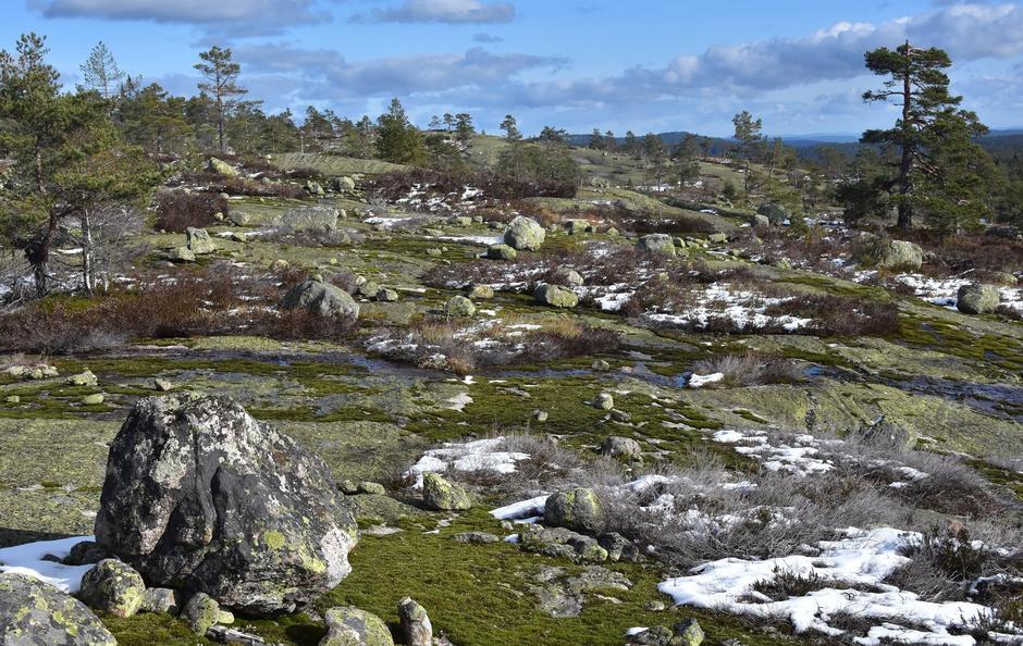 Åpent landskap på Risfjell.