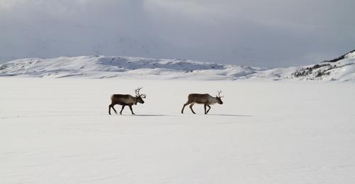 Lite snø i fjellet i Salten, men godt skiføre