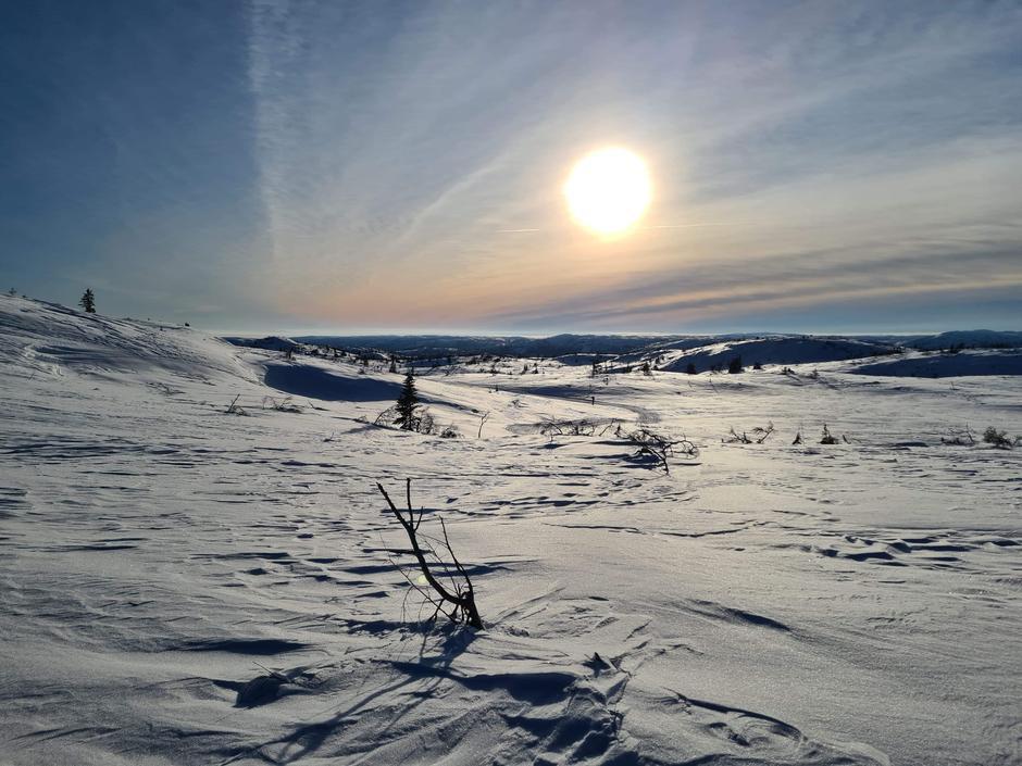 Flott på Rjupetoheii i nærheten av Granbustøyl januar 2021!