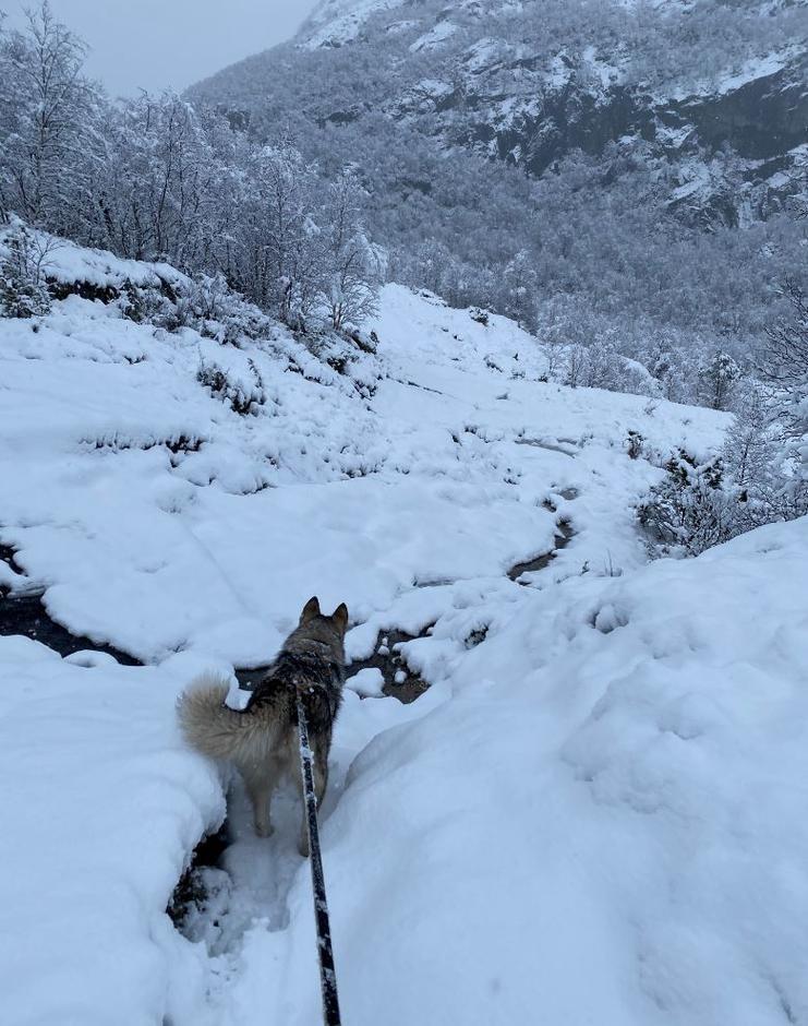 Bildet er tatt onsdag 29 januar på vei inn til Viglesdalen. 400 moh ved Myrstøl.