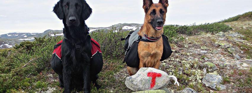 To hunder på vidda. Foto: Friluftsliv med hund.